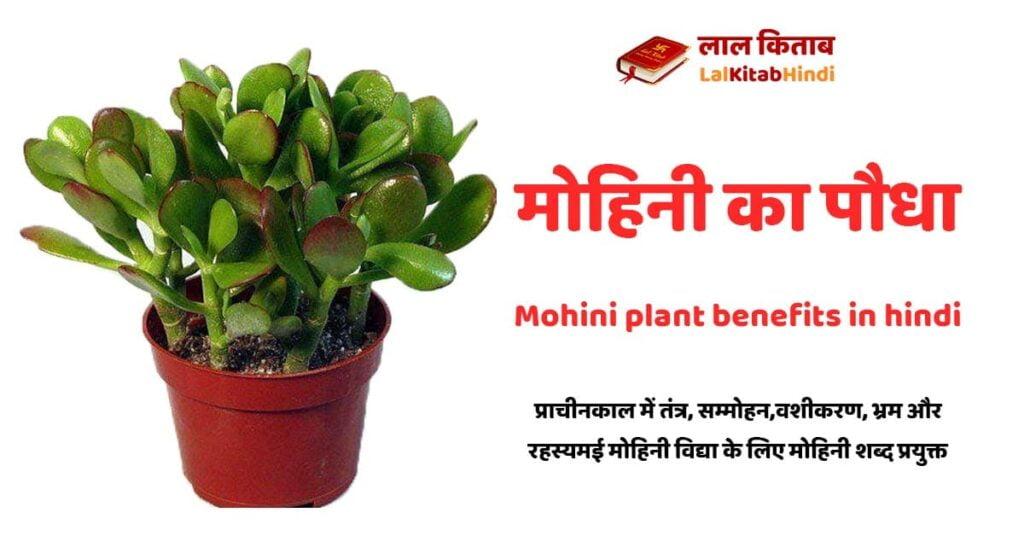 mohini plant in hindi